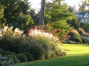Lub front grasses
